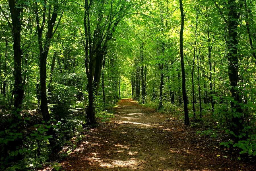 Wanderen - Klosterhof Gutenzell - forest-2735623_1920 - 900x600